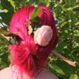 Merci Ingrid :) Coloration Cheveux Rouge Rose – Directions | Color-Mania